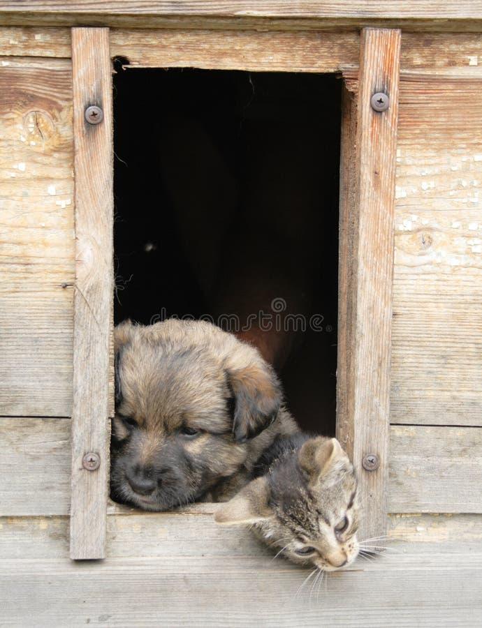 Kat en hond thuis royalty-vrije stock foto's