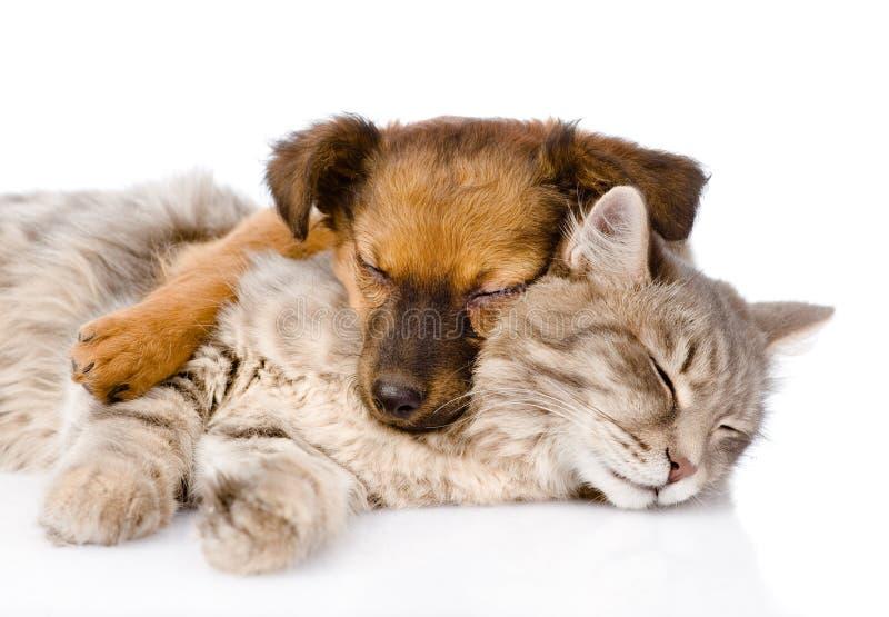 Kat en hondslaap samen Geïsoleerdj op witte achtergrond royalty-vrije stock afbeeldingen