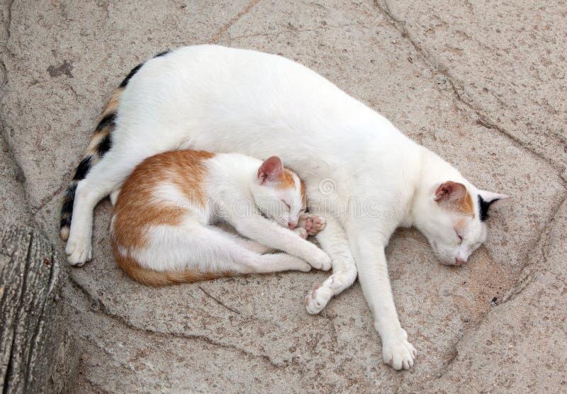 Kat en katje royalty-vrije stock afbeelding