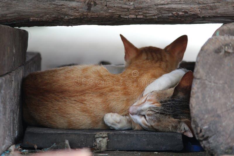 Kat en katje royalty-vrije stock fotografie