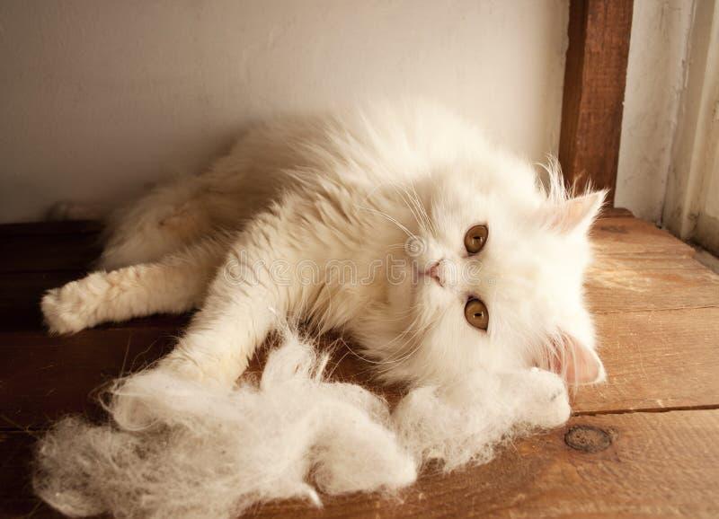 Kat en kattenhaar stock fotografie
