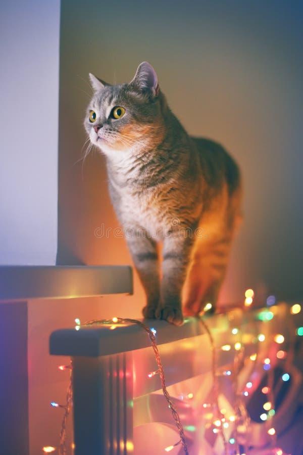 Kat en Kerstmislichten royalty-vrije stock afbeeldingen
