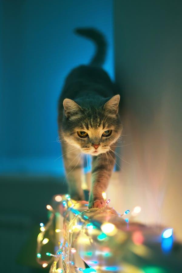 Kat en Kerstmislichten stock afbeeldingen