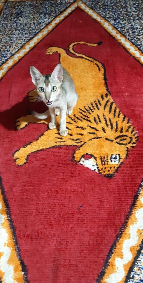 Kat en leeuw stock afbeelding