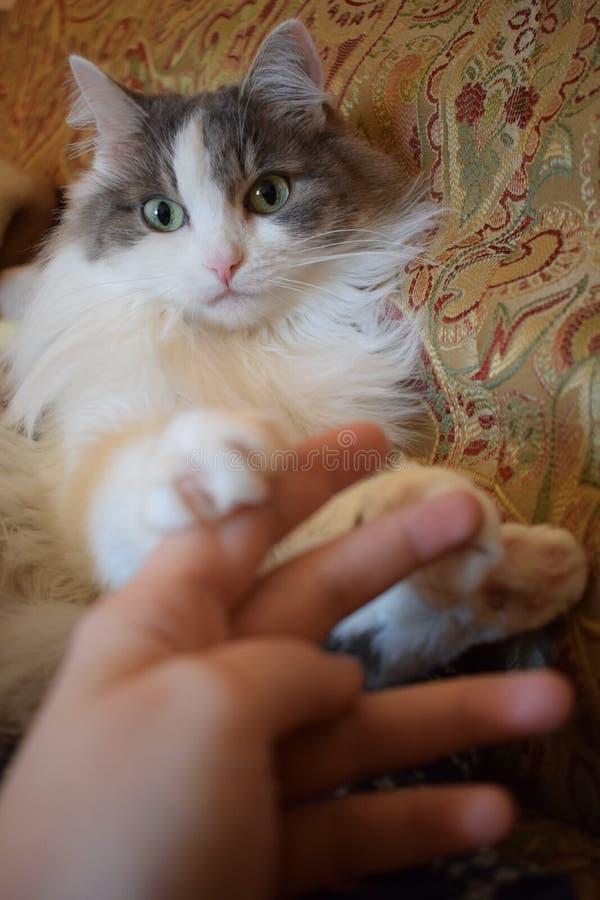 Kat en menselijke hand stock afbeeldingen