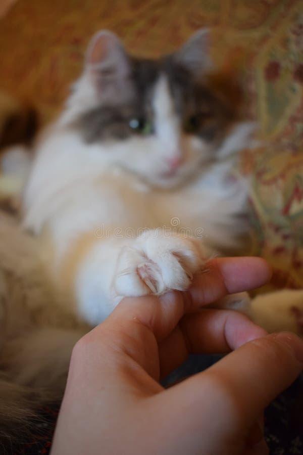 Kat en menselijke hand royalty-vrije stock afbeeldingen