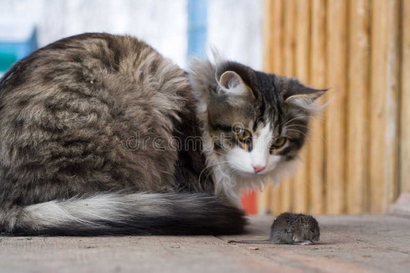 Kat en muis royalty-vrije stock fotografie