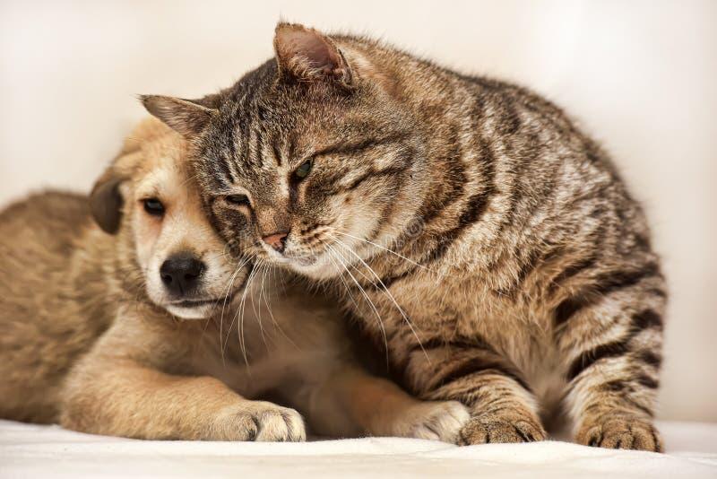 Kat en puppy stock foto's