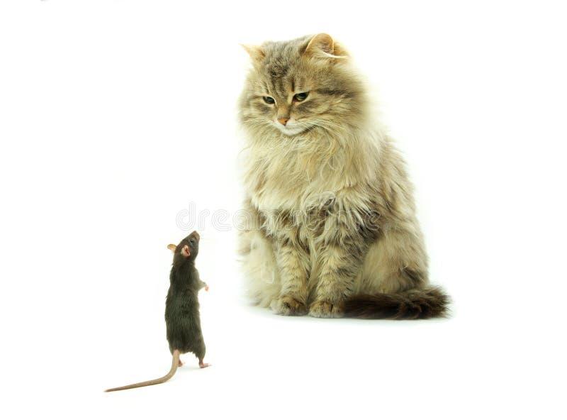 Kat en rat stock foto's