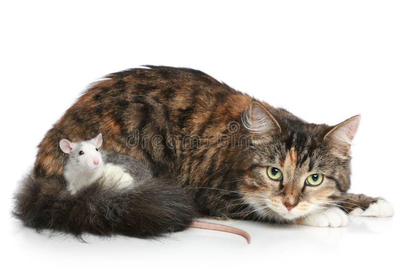 Kat en rat op een witte achtergrond royalty-vrije stock afbeeldingen