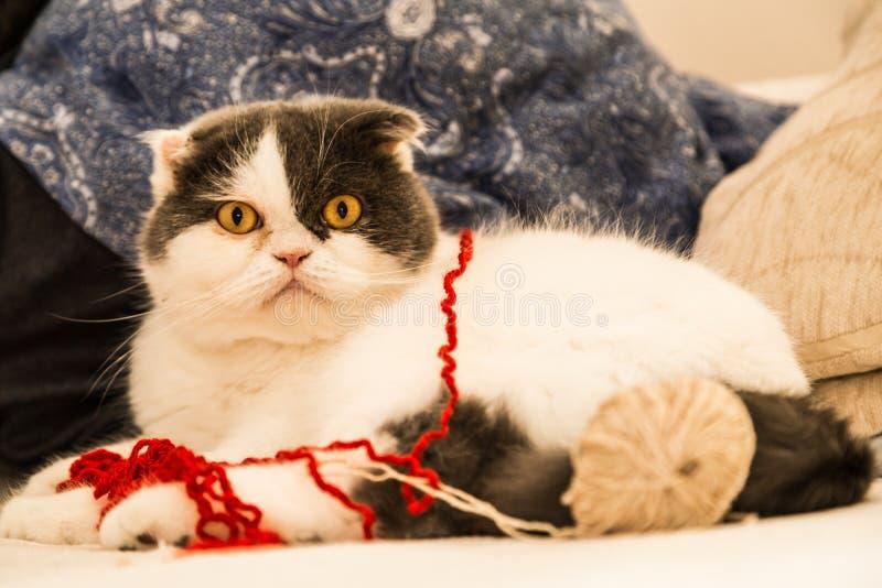 Kat en spelen stock foto's