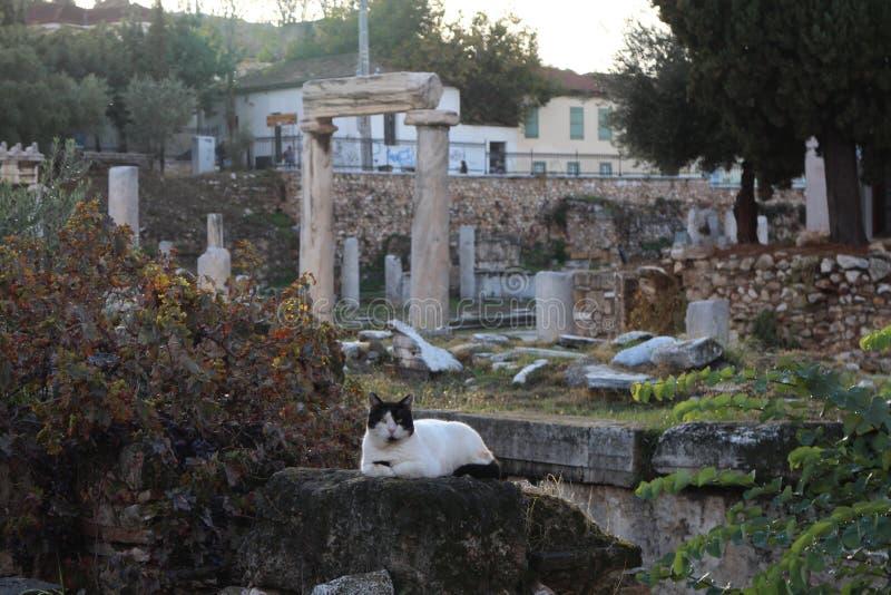 Kat en steenachtige artefacten in Oud Agora van Athene stock afbeelding