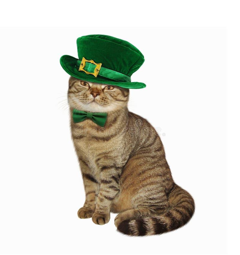 Kat en van Heilige Patricks Dag stock fotografie