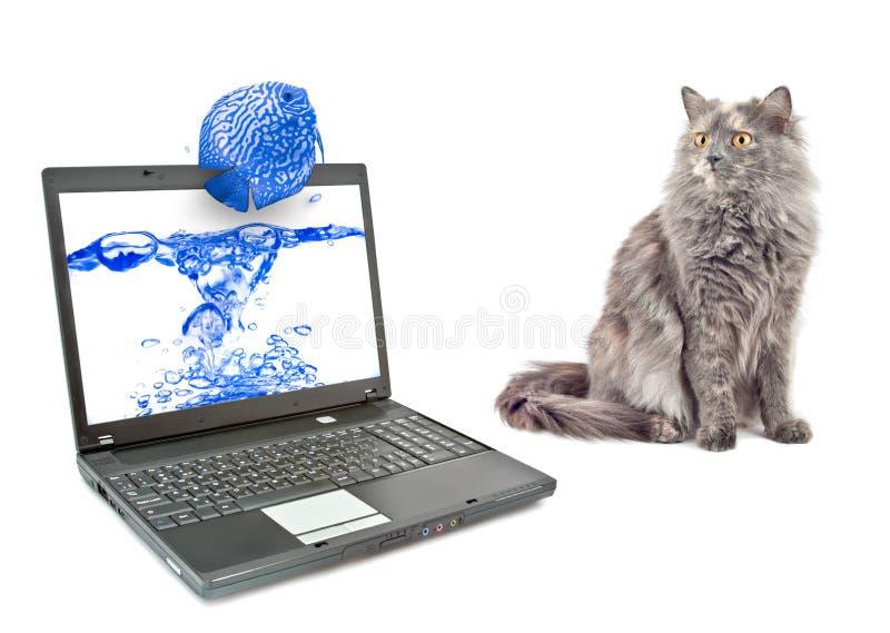 Kat en vissen. royalty-vrije stock afbeeldingen
