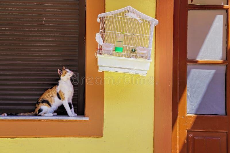 Kat en vogel stock afbeeldingen