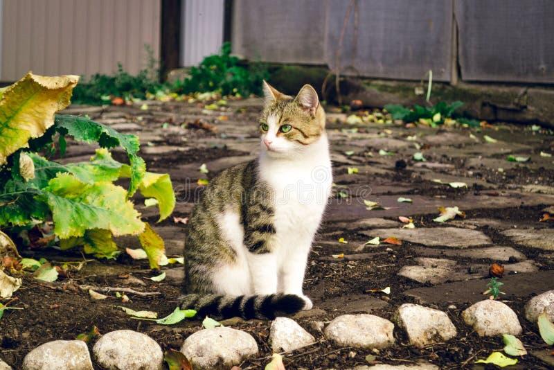 Kat gaat lekker lekker in de ochtend. stock foto