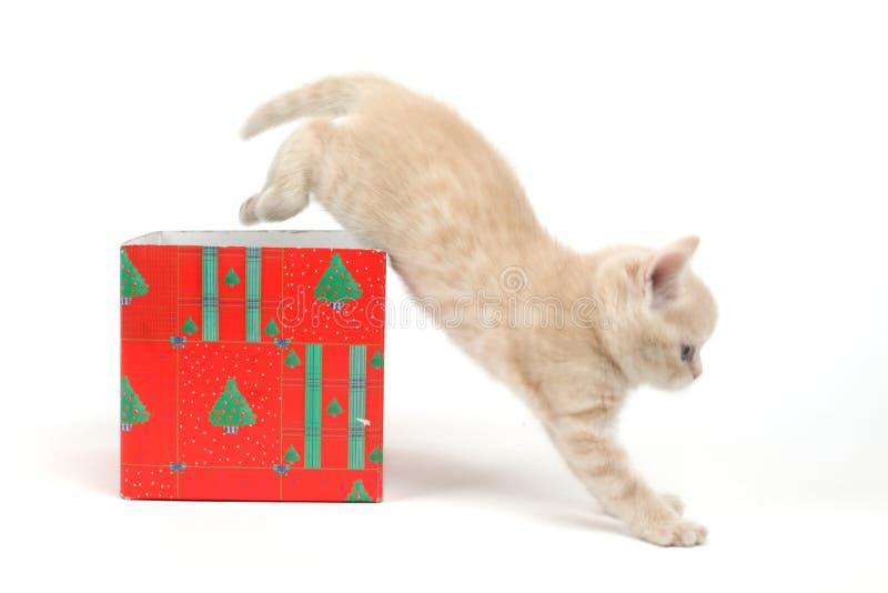 Kat in giftdoos stock afbeelding