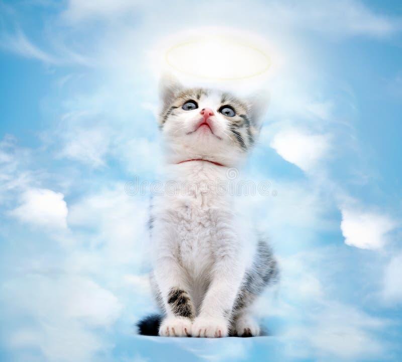 Kat in hemel stock foto's