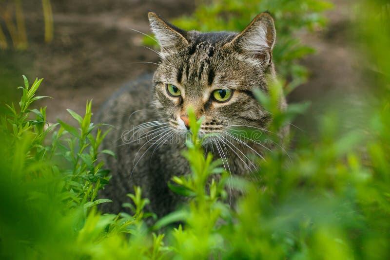 Kat in het gras royalty-vrije stock foto