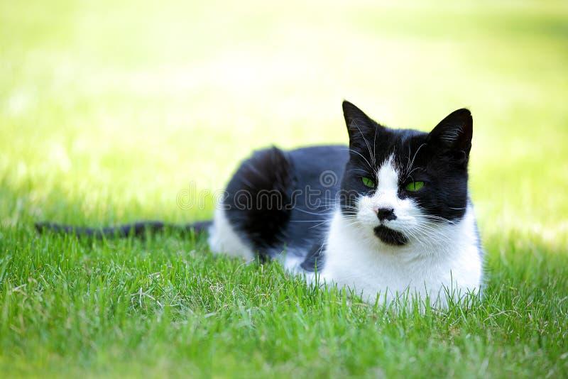Kat in het gras stock fotografie