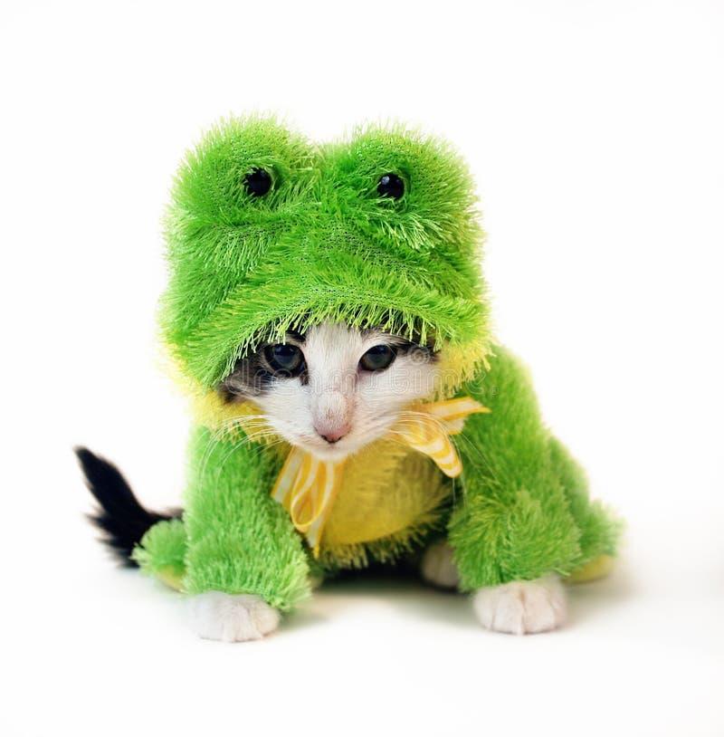 Kat in het Kostuum van de Kikker royalty-vrije stock fotografie