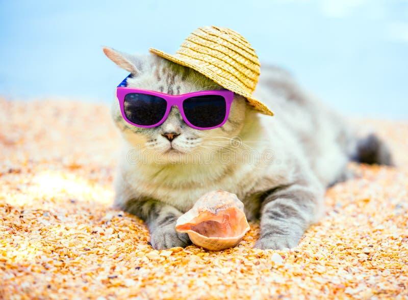 Kat het ontspannen op het strand stock fotografie