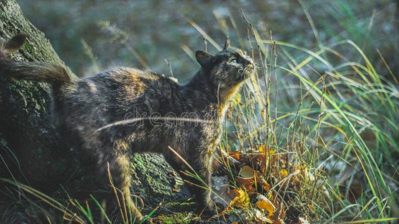 Kat in het Park royalty-vrije stock afbeeldingen