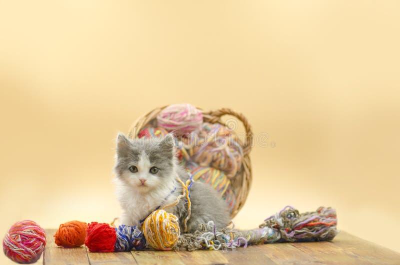 Kat het spelen met ballen van wol stock fotografie
