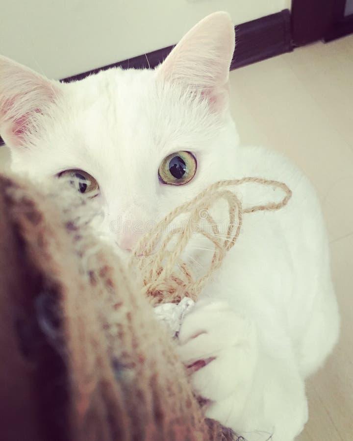 Kat het spelen met zijn stuk speelgoed stock foto's