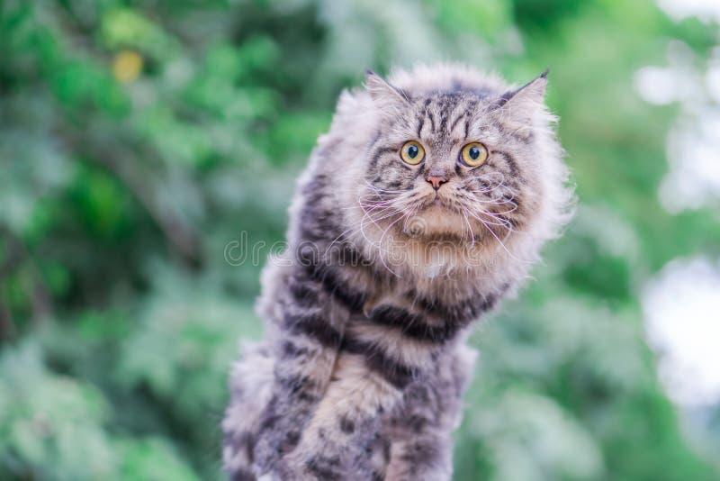 Kat het springen en groene bokeh stock foto's