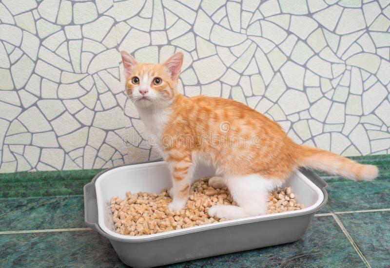 Kat in het toilet royalty-vrije stock foto's