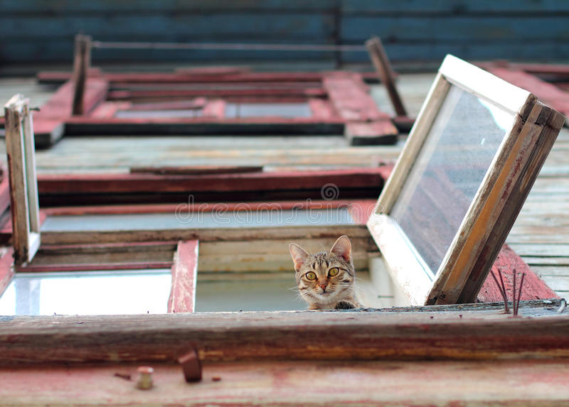 Kat in het venster stock afbeelding
