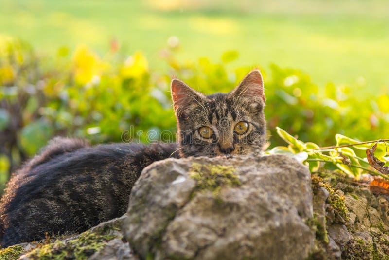 Kat het verbergen achter een rots royalty-vrije stock foto's
