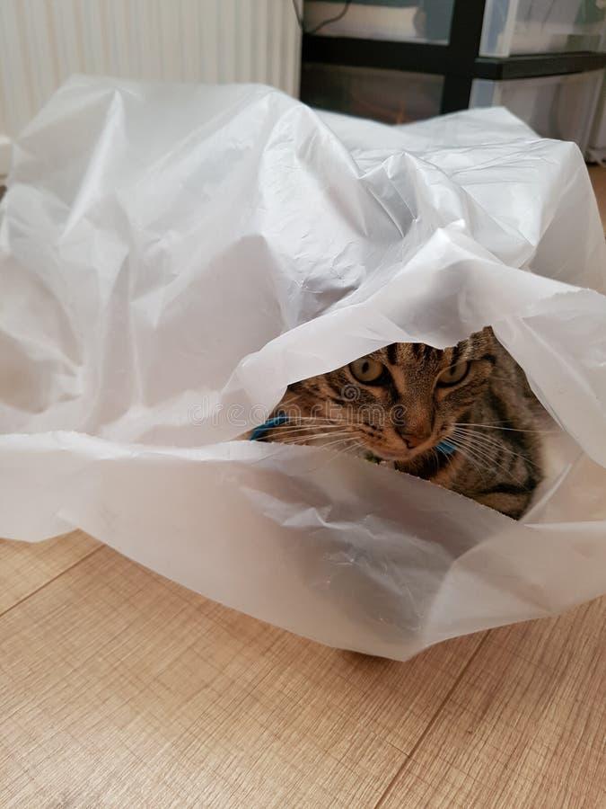 Kat i de zak arkivfoton