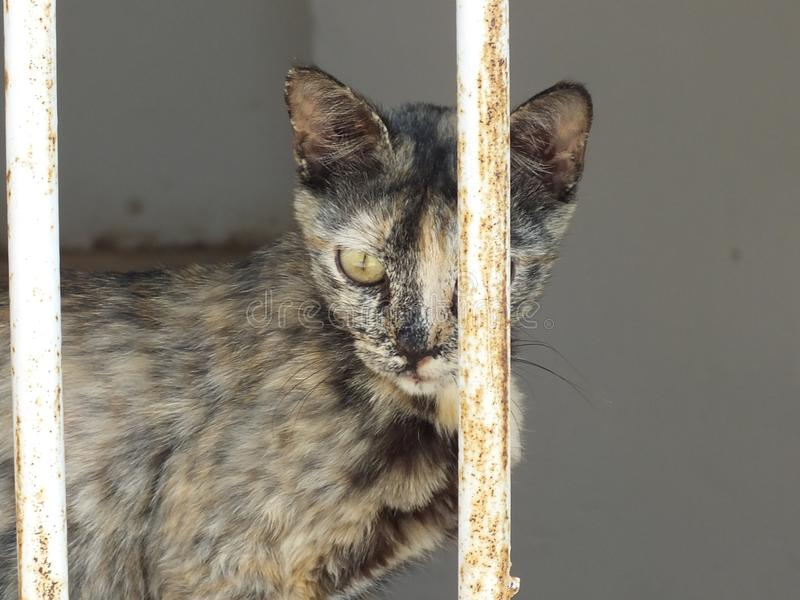 Kat in Jericho royalty-vrije stock fotografie