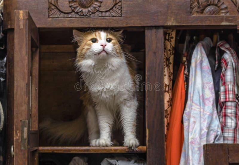 Kat in kast royalty-vrije stock foto's