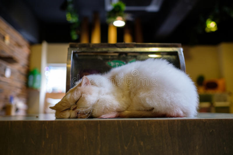 Kat in kattenkoffie stock afbeelding