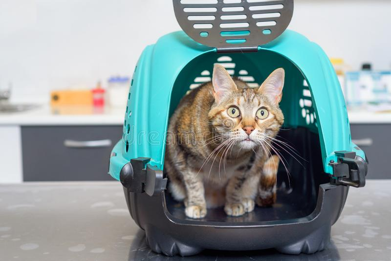 Kat in kennel bij veterinaire kliniek royalty-vrije stock foto's