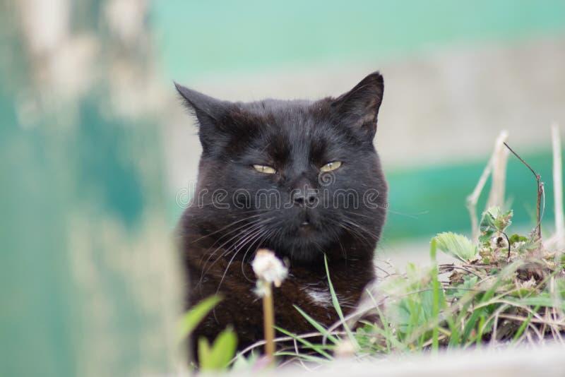 Kat in kruiwagen royalty-vrije stock fotografie