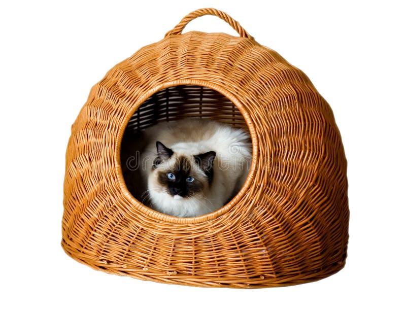 Kat in mand stock afbeelding