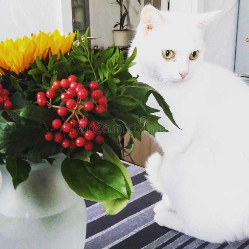 Kat met bloemen stock fotografie