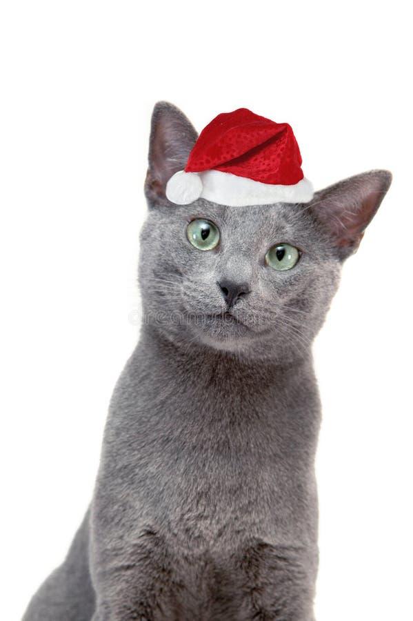 Kat met de hoed van santa stock fotografie