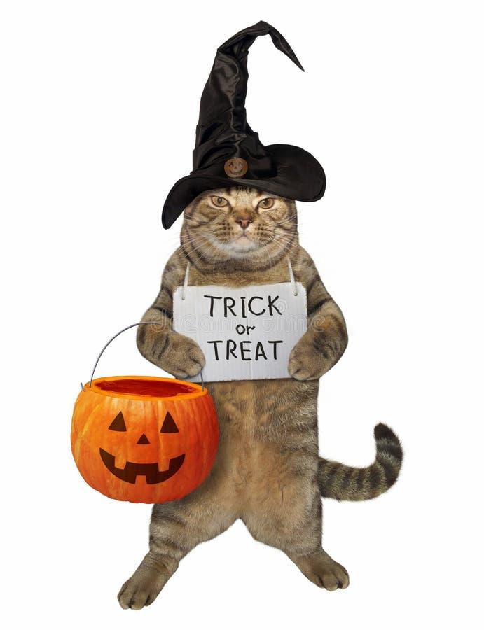 Kat met een pompoenzak en een teken stock afbeeldingen