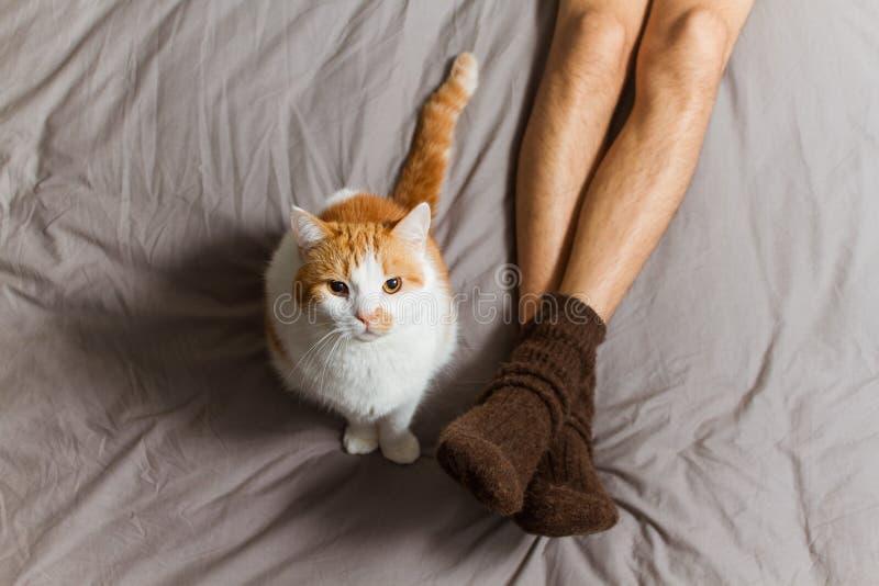 Kat met eigenaar op bed stock foto
