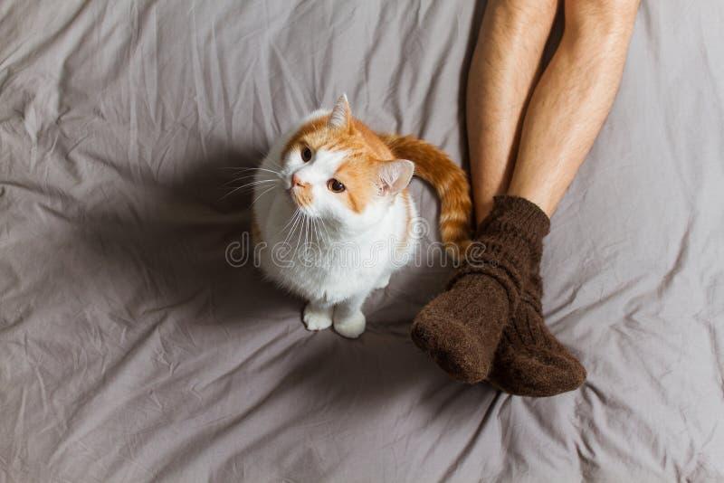 Kat met eigenaar op bed stock afbeelding