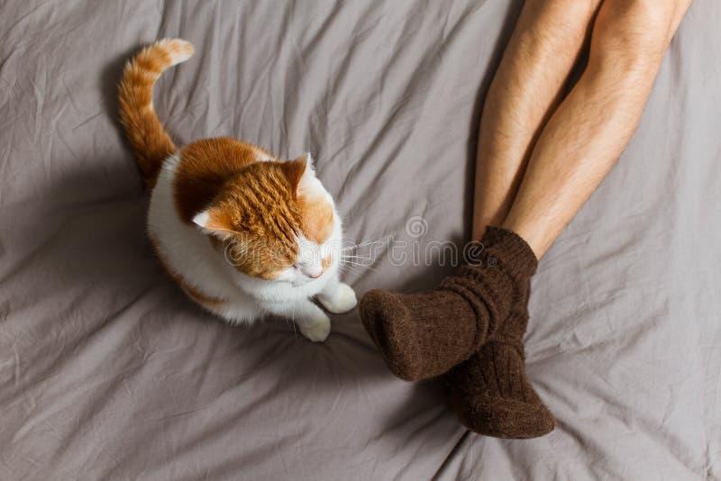 Kat met eigenaar op bed royalty-vrije stock afbeeldingen