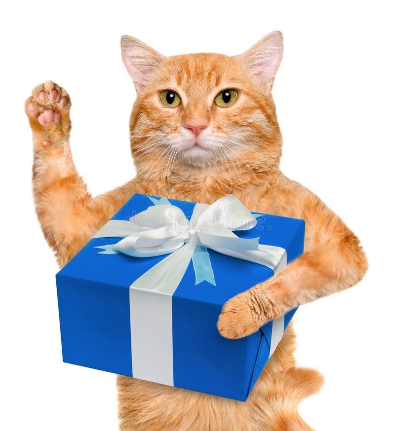Kat met gift royalty-vrije stock fotografie