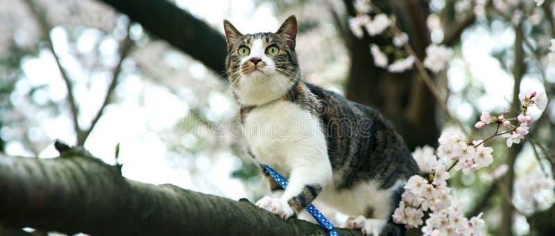 Kat met groene ogen die op een boomboomstam zitten stock foto