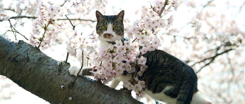 Kat met groene ogen die op een boomboomstam zitten royalty-vrije stock afbeelding
