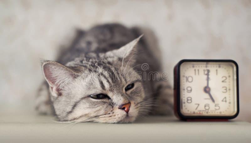 Kat met klok stock fotografie